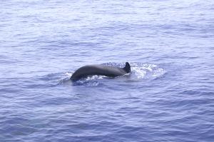 dolfijnen vanaf de boot