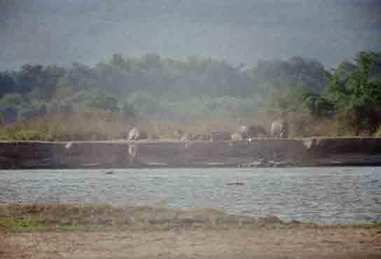 hippos in de zon