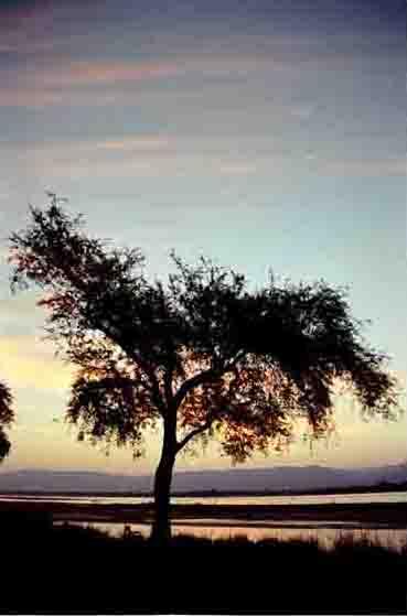 Maansikkel bij zonsondergang